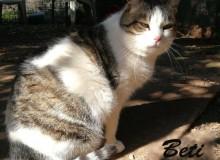 Beti – mačka, majka, kraljica