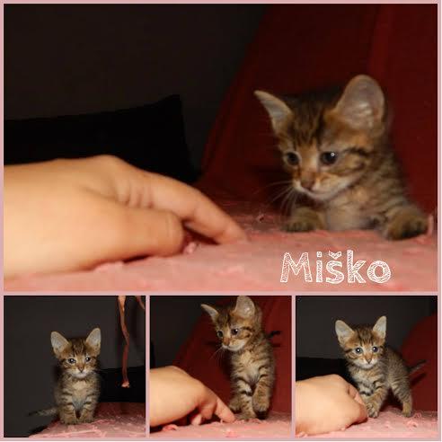 MIŠKO