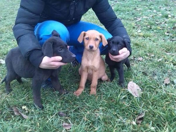 Veseli štenci