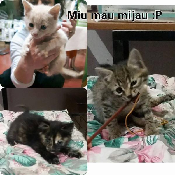 Mačići trebaju domove :)