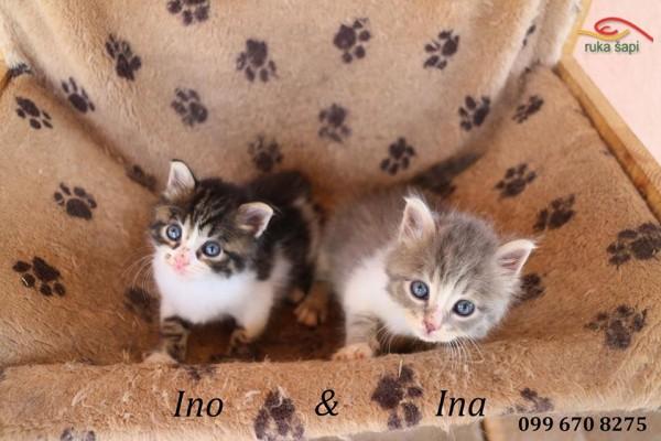 Ino & Ina