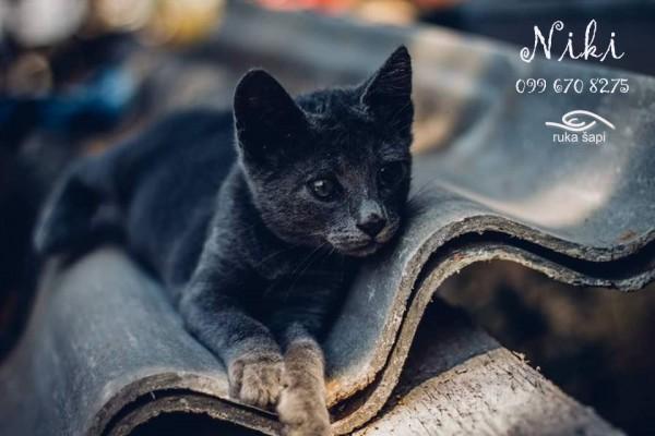 niki4