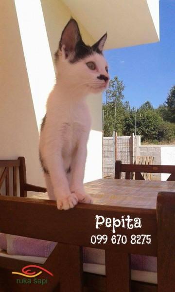 pepita2