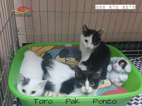 Pončo, Toro & Pak
