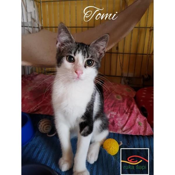 tomi3