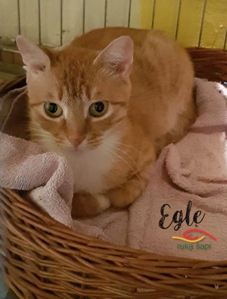 Egle2